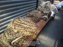Mengenal Motif Batik Kawung